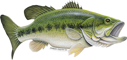 Graphic of Large Mouth Bass - Saber Tooth Co.