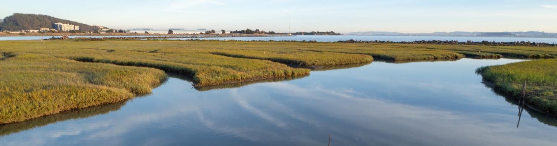 Shoreline Resilience