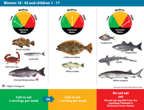 Contaminants in san francisco bay sport fish san for Sf bay fishing report